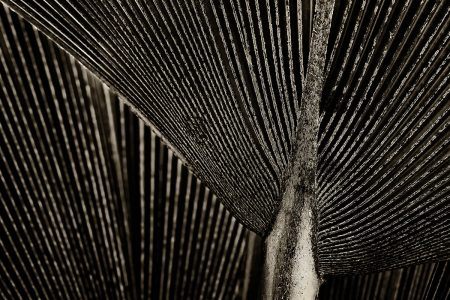 Palm Frond by Robynne Limoges