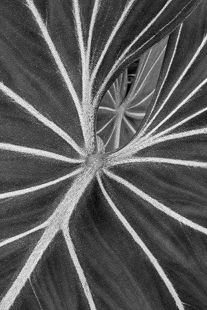 Plant Life Matrix by Cindy Vondran