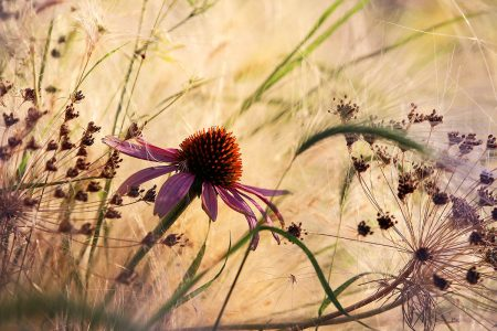 Hot Summer by Rosanna Castrini