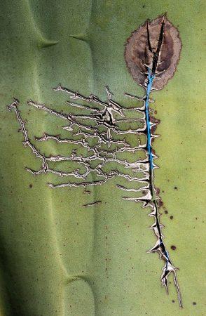 Healed Leaf by Els van den Boorn