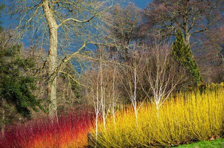 The Savill Garden by Jacky Parker