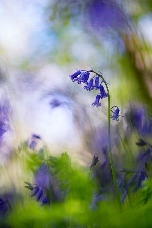 Woodland Delight by Sarah-Fiona Helme