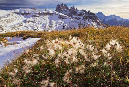 Mountain Avens by Bob Gibbons