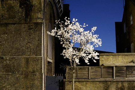 Battersea Blossom by Ben Gold