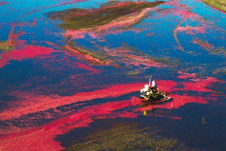 Cranberry World by Jacky Hobbs