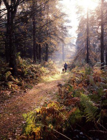 Walking the Dog by John Whitaker