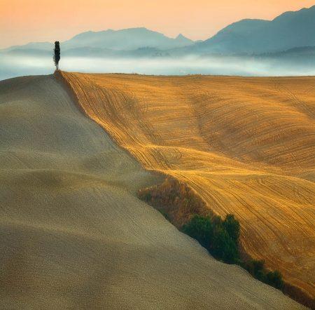 Cypress by Krzysztof Browko