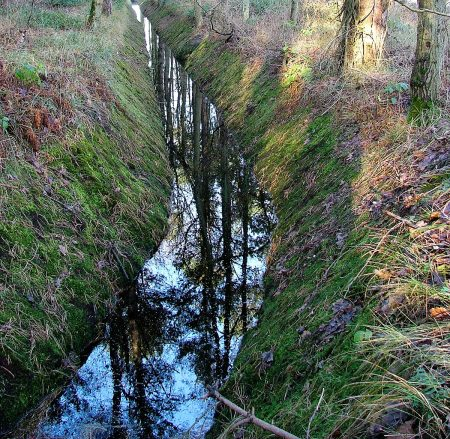 Woodland Ditch by Jasmine Clegg