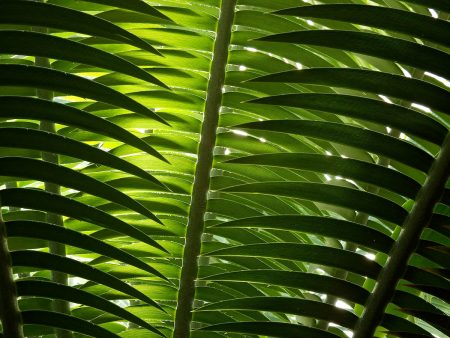 Jungle Leaves by Jasmine Clegg