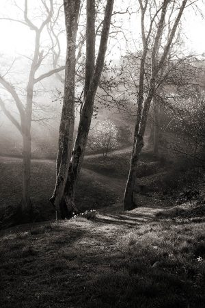 First Light at Sherwood by Dianna Jazwinski