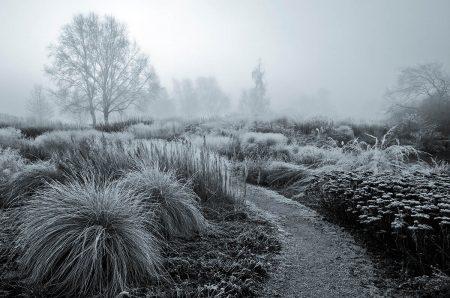 Frosty Garden by Annie Green-Armytage