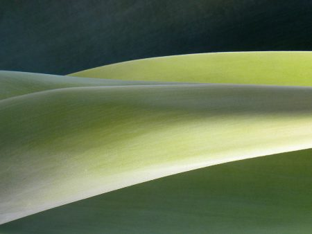 Agave Hills by J. Keith Berger
