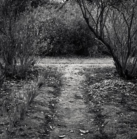 Two Paths by Cate McRae