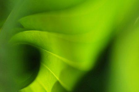 Green Spiral by Sylvie Pinsonneault