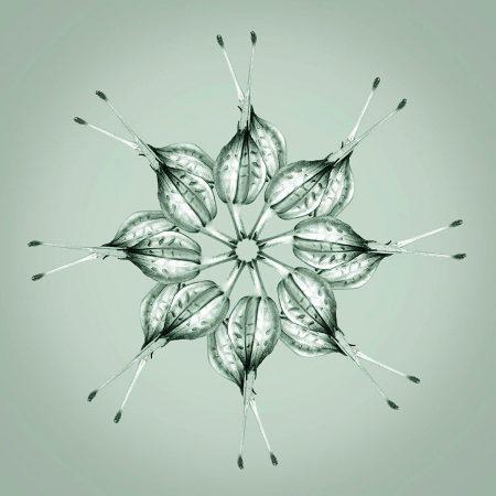 Geranium lucidum by Geoff du Feu