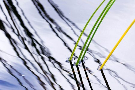 Reeds by Magnar Bornes