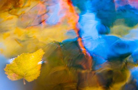 Autumn Leaves by Leena Holmstrom