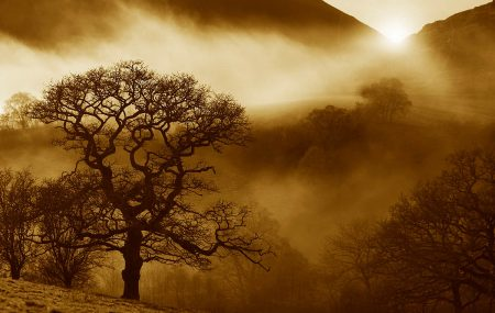 Oak Sunrise by Alan Price