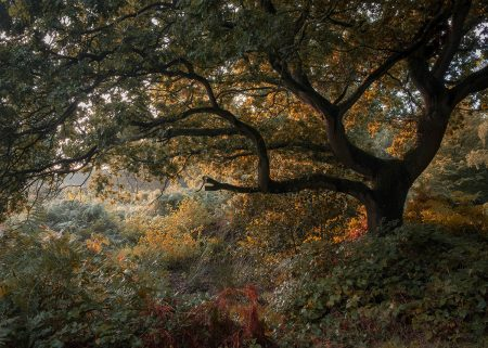 Teenage Oak by David Clarke