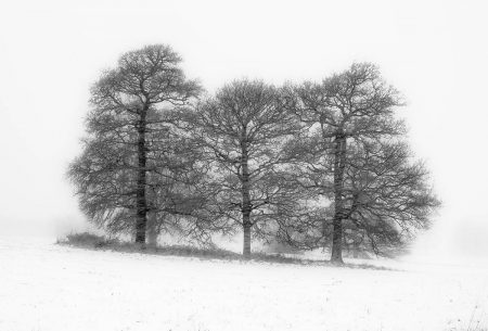 Winter Oaks by Gilly Hopson