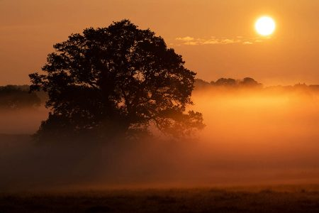 Good Morning Oak by David Clarke