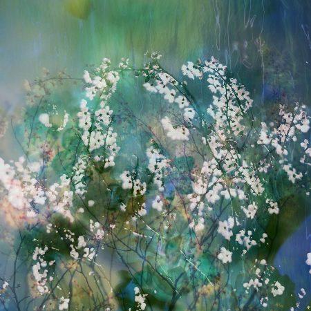 Cherry Blossom by Jo Stephen
