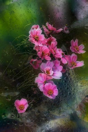 Iced Windflowers by Dianne English