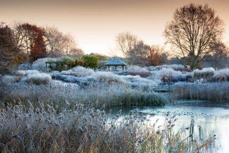 Hoar frost at Pensthorpe by Richard Bloom