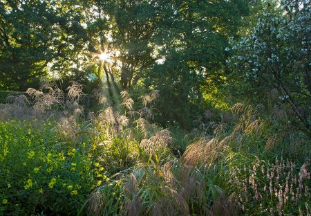 Sunrise at Knoll Gardens by Clare Forbes