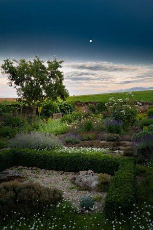 Herb Garden by Night by Sibylle Pietrek