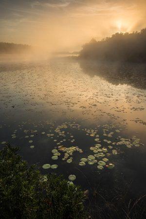 Golden Morning by Bob Luijks