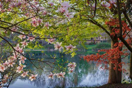Spring Kiss by Rosanna Castrini