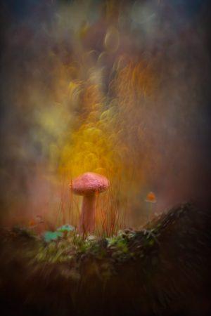 Psychedelic Mushroom by Jackie Kramer