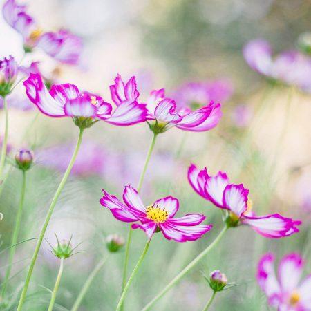 Dancing Petals by Annette Lepple