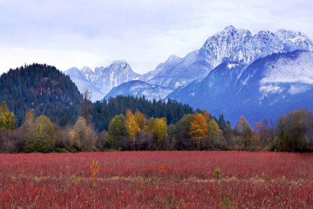 Blueberry Fields by Gloria King