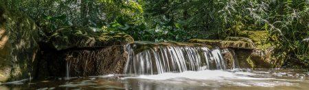 Trauttmansdorff Creek by Annette Bardic