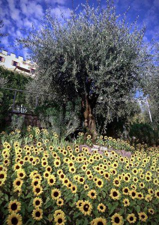 Surrealist Sunflowers by Bolonie Shuhaibar