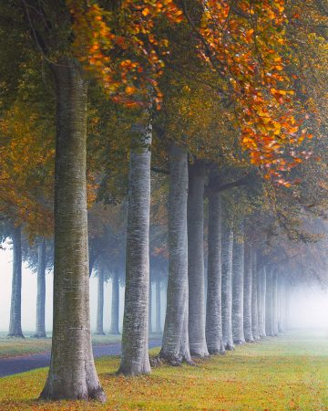 The Avenue by Andy Farrer