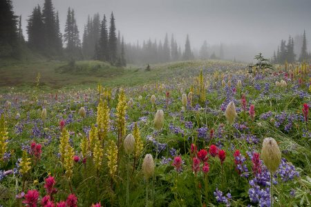 Mount Rainier in the Mist by Robert Gibbons