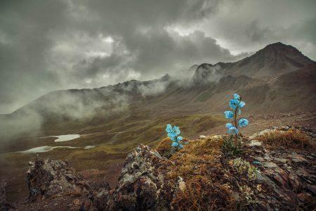 Companion on the Mountain by Yi Fan