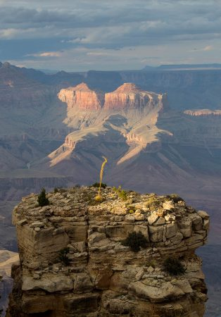Flowering <em>Agave</em> at the Grand Canyon by Stephen Studd