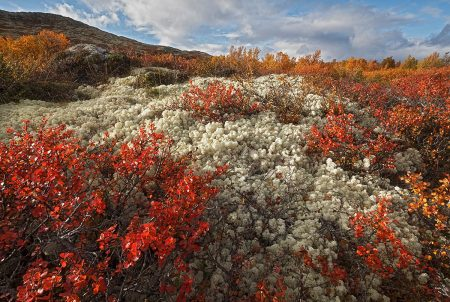 Rondane Colours by Monica Siri