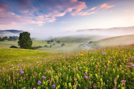 Wildflower Meadows by Richard Bloom