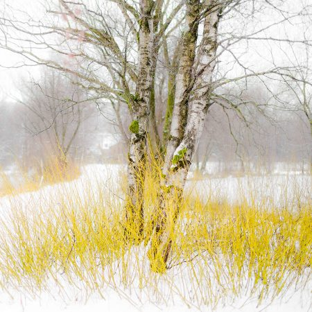 On a Cold Winter's Day by Rachele Z. Cecchini