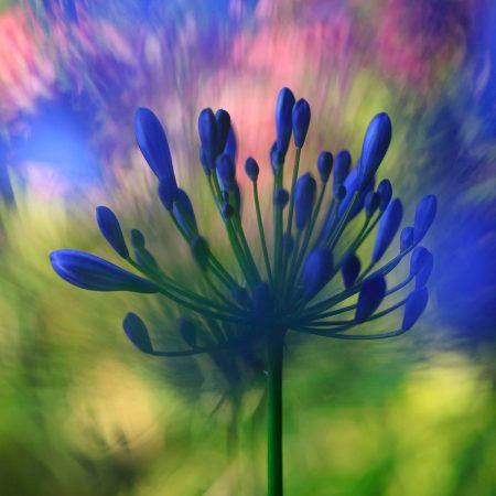 The Power of Colour by Ulla Cornelius