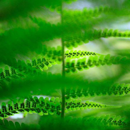 Fern Green by Ulla Cornelius