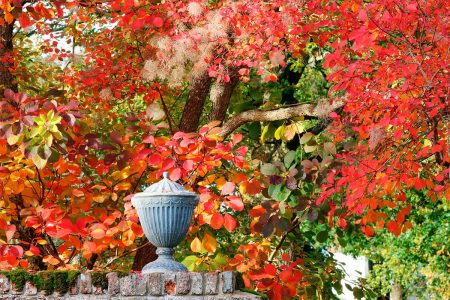 <em>Cotinus</em>  and the Urn by Jim Higham