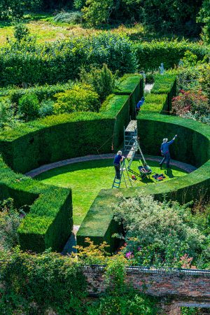 Annual Hedge Cut II by Carolyn Haslam