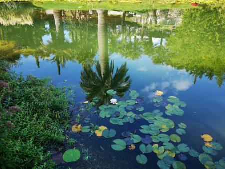 Heavenly Palms by Marina Mergel