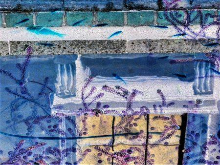 Fish Pond Fantasy by Maggie Lambert